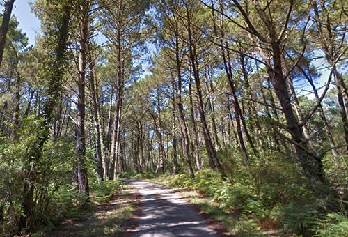 Forêts de pins maritimes à proximité de la Teste-de-Buch