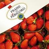 fraise-perigord