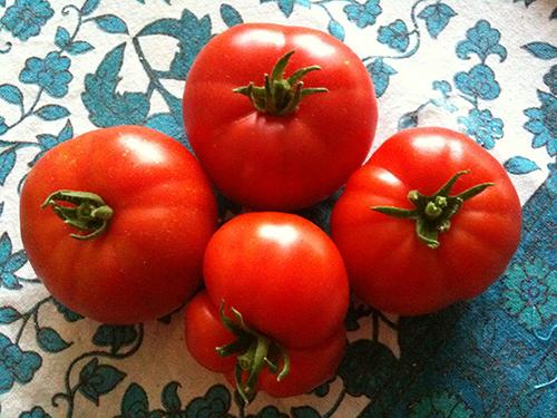 Les délicieuses tomates de Marmande