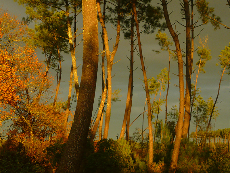 Les Hautes Landes - Crédit photo : Marie Anne ROBERT - Own work, CC BY-SA 4.0, https://commons.wikimedia.org/w/index.php?curid=48991982