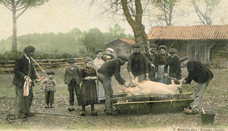 La fête du pèle-porc va bientôt battre son plein. Tout le monde, ou presque, s'en réjouit.