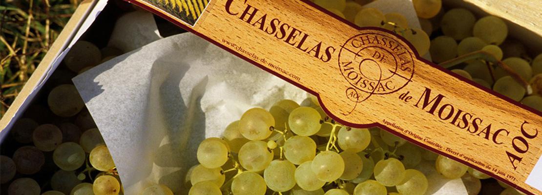 La promesse d'un goût sucré et délicat - Crédit photo: Syndicat de Défense du Chasselas de Moissac AOP
