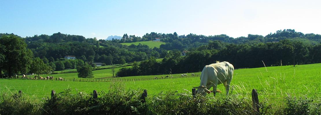 Paysage basque, non loin d'Urrugne - Crédit photo: FranceSudOuest