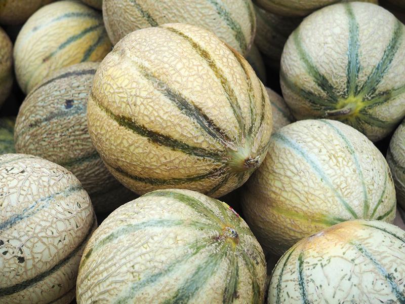 melons de lectoure