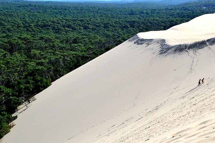 dune du pilat recule sur la forêt