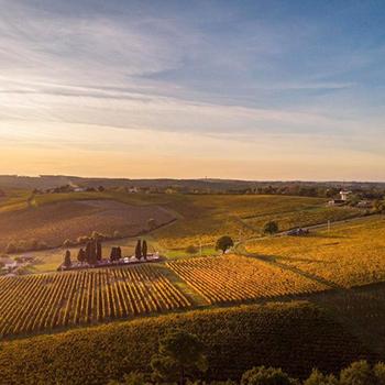 vignobles à Saint-Pierre-de-Buzet